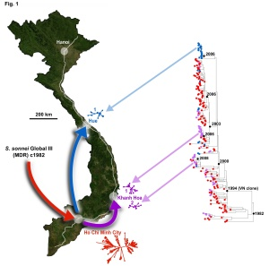 Phylogeny of Vietnamese S. sonnei and map of Vietnam, showing the inferred path of evolution and geographical spread.