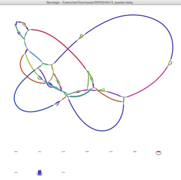 SRR3240413_bandage_graph